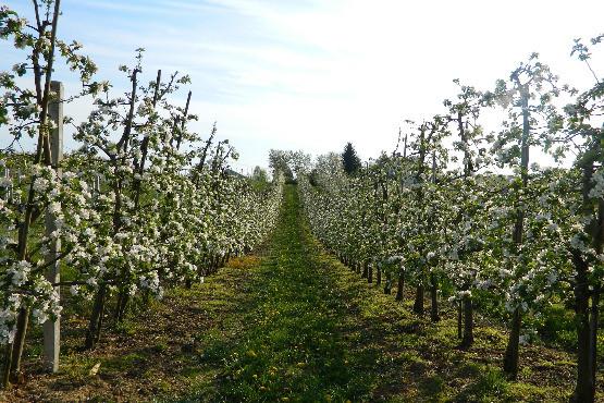 Külföldi segítségre szorul az orosz mezőgazdaság