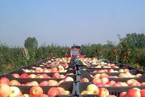 Csúcstechnológia az almatárolásban