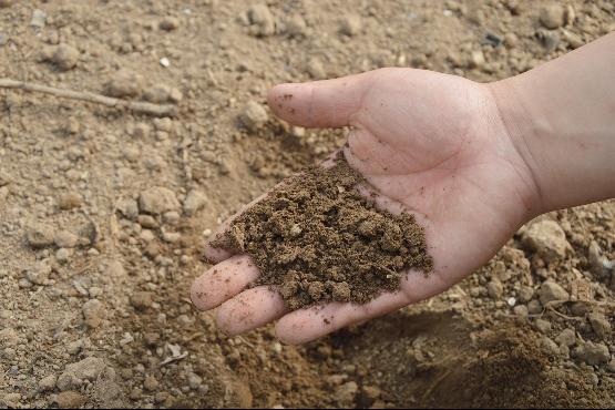A termőtalaj tulajdonképpen élő szervezet