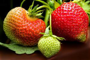 Szamóca növény biológiája és termesztése
