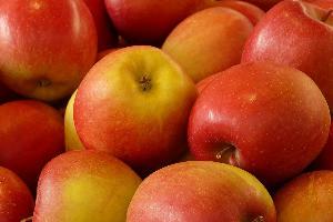 Hogyan tápláljuk almafáinkat a szép, egészséges és jól tárolható termés érdekében?