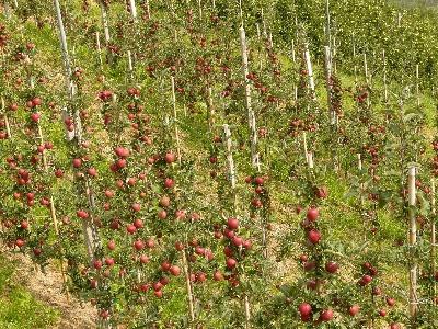 A Gyümölcstermesztés korszerűsítése tanácskozás és bemutató - Lengyel - szeptember 28.