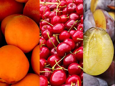 Gyümölcstermesztés Korszerűsítése