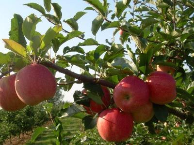 Precíziós öntözéstechnológiai továbbképzés - 2017.05.22 (alma, cseresznye, őszibarack, kajszibarack)