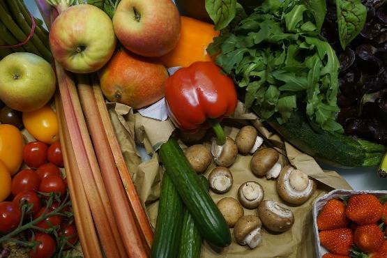 A precíziós gazdálkodás a megfelelő növénytáplálással kezdődik.
