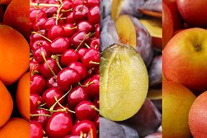 Gyümölcstermesztők Szakmai Konferenciája-2019