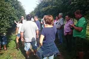 Cseresznye metszés görög szaktanácsadókkal- 2017.09.11.