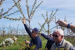 Cseresznye szakmai nap görög szaktanácsadókkal 2018.04.14.