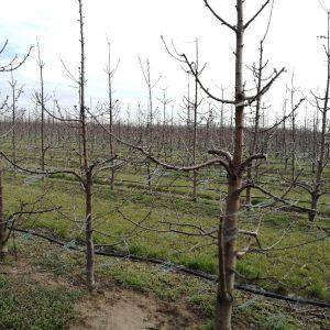 ültetvénylátogatás
