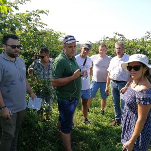 Bodza ültetvényben görögökkel